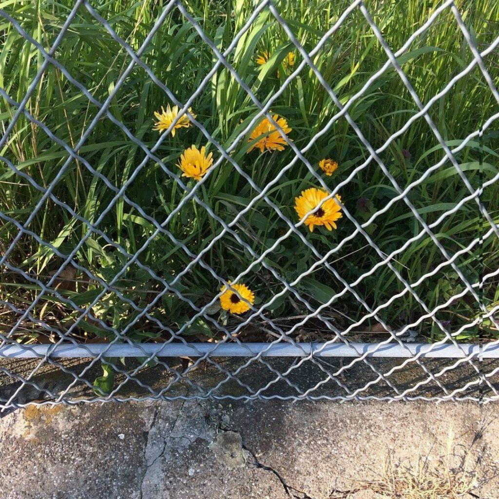 Les prisons du dehors - Fabulettes - Christina Mirjol